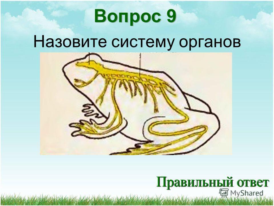 Вопрос 9 Назовите систему органов