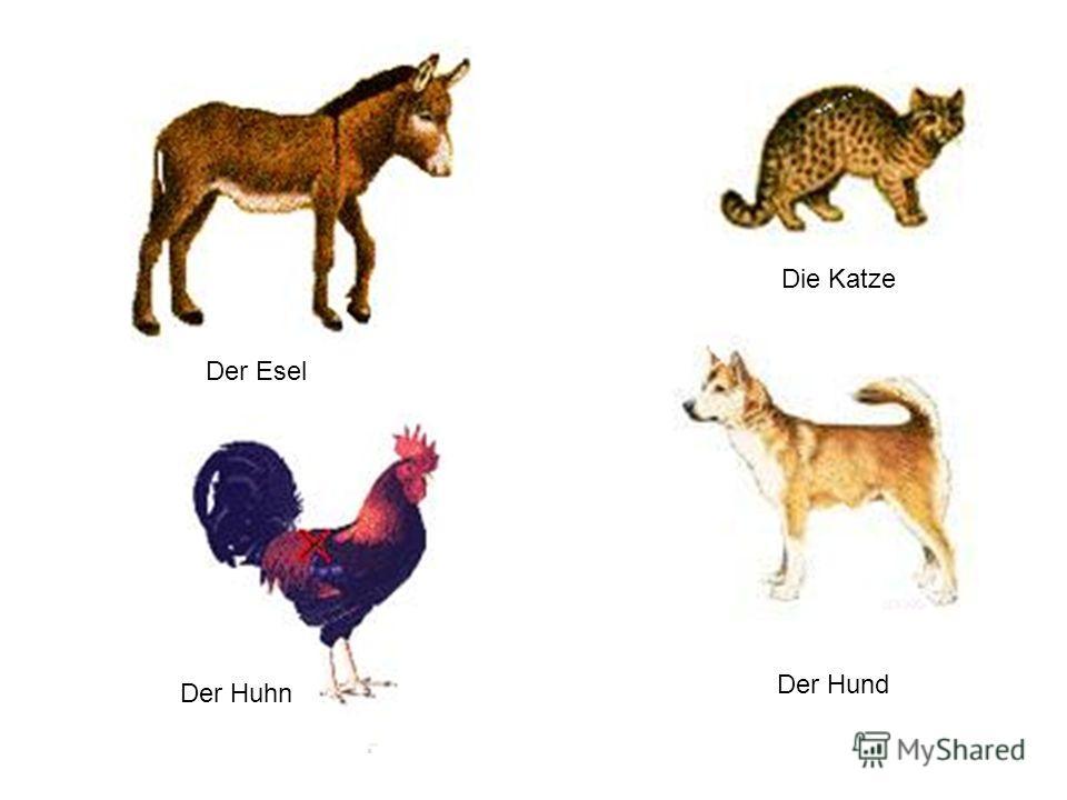 Der Esel Die Katze Der Huhn Der Hund