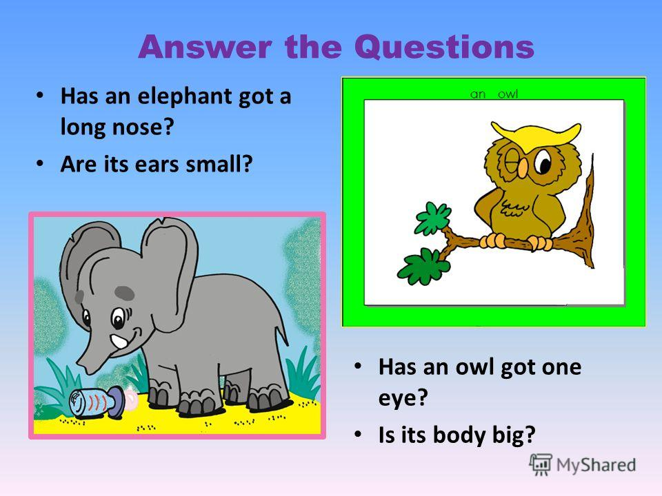 Has an owl got one eye? Is its body big? Has an elephant got a long nose? Are its ears small? Answer the Questions