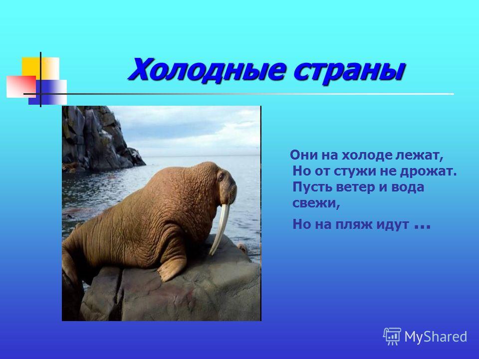 Холодные страны Они на холоде лежат, Но от стужи не дрожат. Пусть ветер и вода свежи, Но на пляж идут...