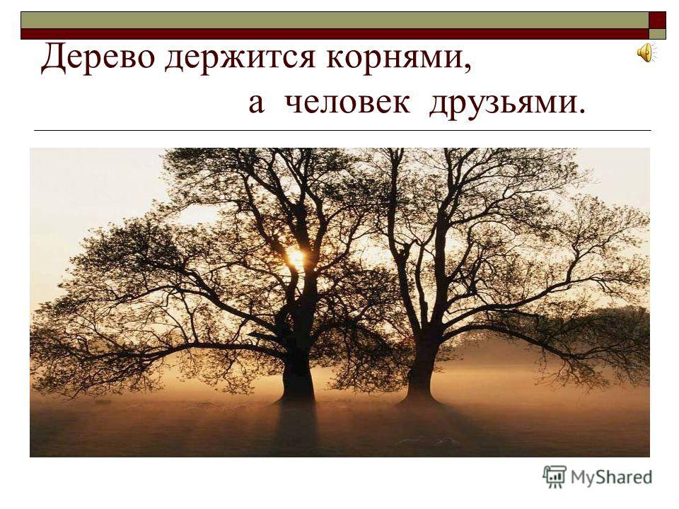 Дерево держится корнями, а человек друзьями.