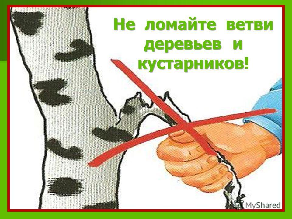 Не ломайте ветви деревьев и кустарников Не ломайте ветви деревьев и кустарников!