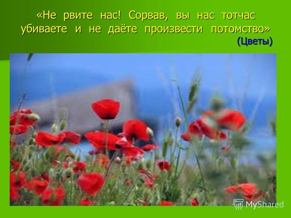 «Не рвите нас! Сорвав, вы нас тотчас убиваете и не даёте произвести потомство» (Цветы)