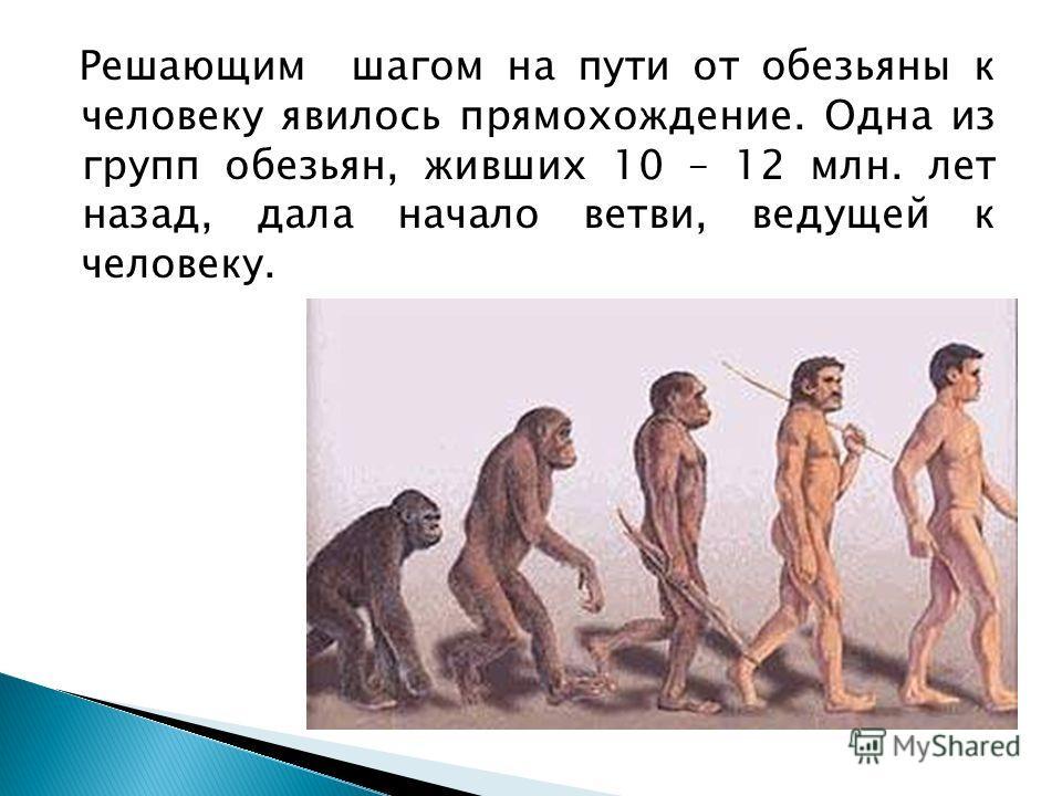 Решающим шагом на пути от обезьяны к человеку явилось прямохождение. Одна из групп обезьян, живших 10 – 12 млн. лет назад, дала начало ветви, ведущей к человеку.