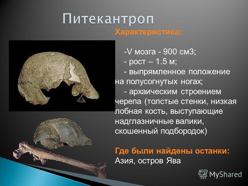 Характеристика: -V мозга - 900 см 3; - рост – 1.5 м; - выпрямленное положение на полусогнутых ногах; - архаическим строением черепа (толстые стенки, низкая лобная кость, выступающие надглазничные валики, скошенный подбородок) Где были найдены останки
