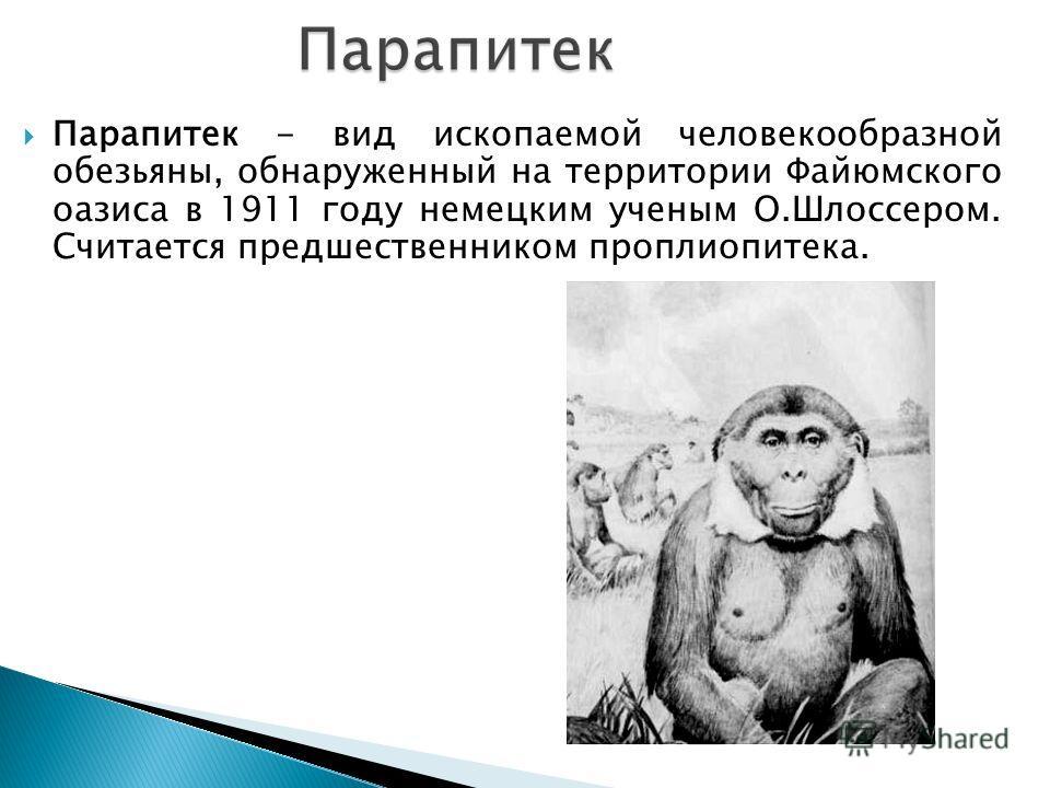 Парапитек - вид ископаемой человекообразной обезьяны, обнаруженный на территории Файюмского оазиса в 1911 году немецким ученым О.Шлоссером. Считается предшественником проплиопитека.