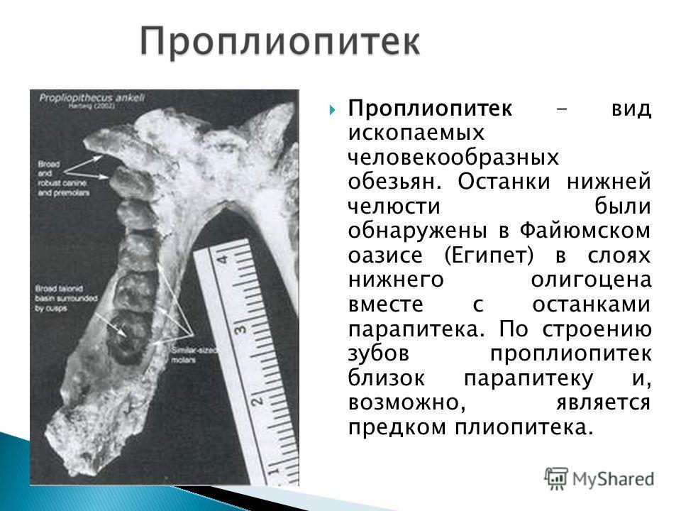Проплиопитек - вид ископаемых человекообразных обезьян. Останки нижней челюсти были обнаружены в Файюмском оазисе (Египет) в слоях нижнего олигоцена вместе с останками парапитека. По строению зубов проплиопитек близок парапитеку и, возможно, является