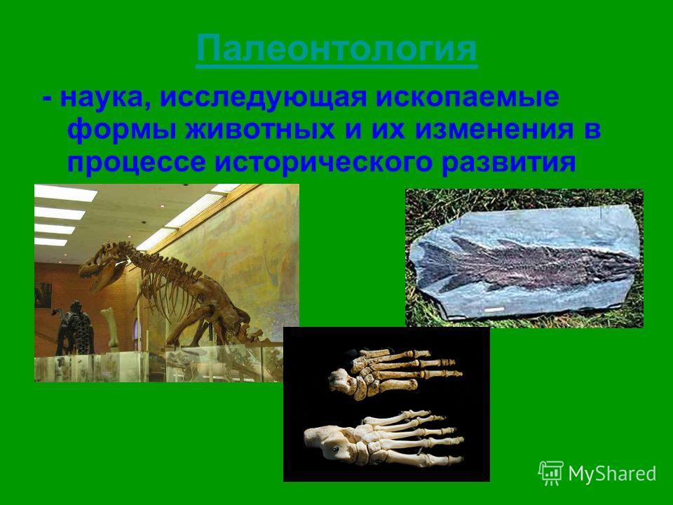 Палеонтология - наука, исследующая ископаемые формы животных и их изменения в процессе исторического развития