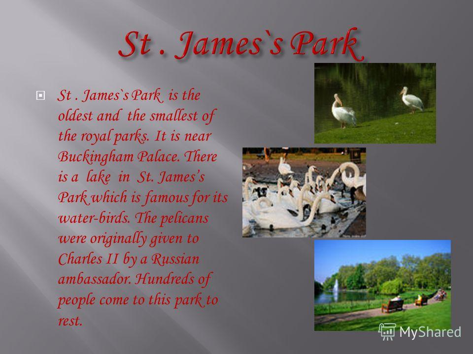 St. James`s Park is the oldest and the smallest of the royal parks. It is near Buckingham Palace. There is a lake in St. Jamess Park which is famous for its water-birds. The pelicans were originally given to Charles II by a Russian ambassador. Hundre
