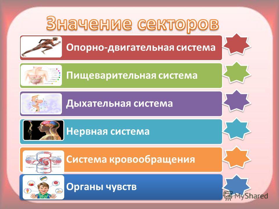 Опорно-двигательная система Пищеварительная система Дыхательная система Нервная система Система кровообращения Органы чувств