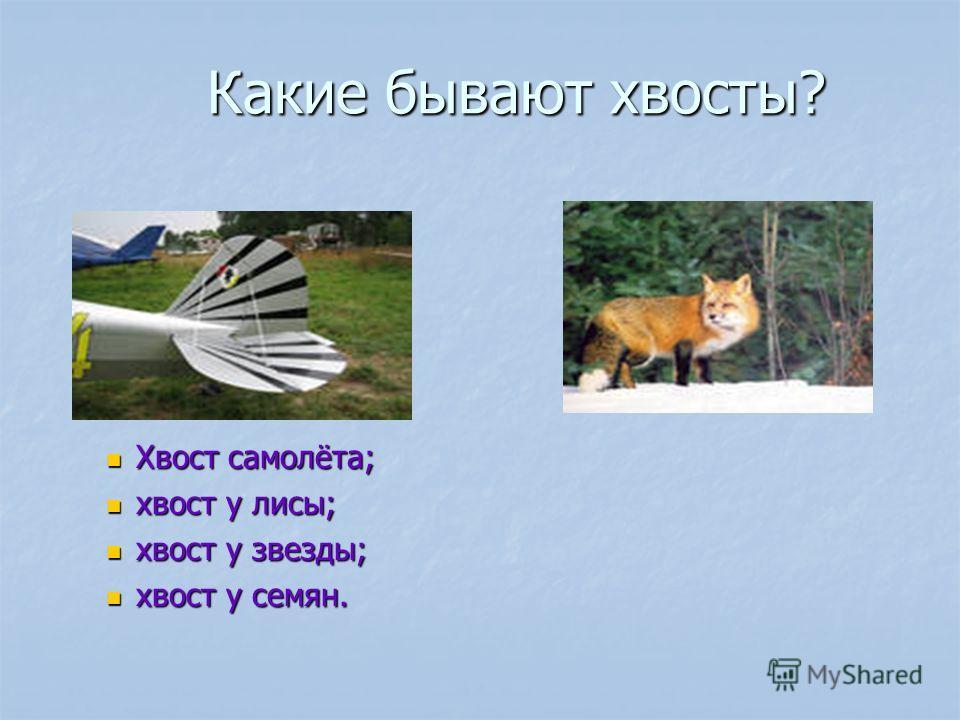 Какие бывают хвосты? Какие бывают хвосты? Хвост самолёта; хвост у лисы; хвост у звезды; хвост у семян.