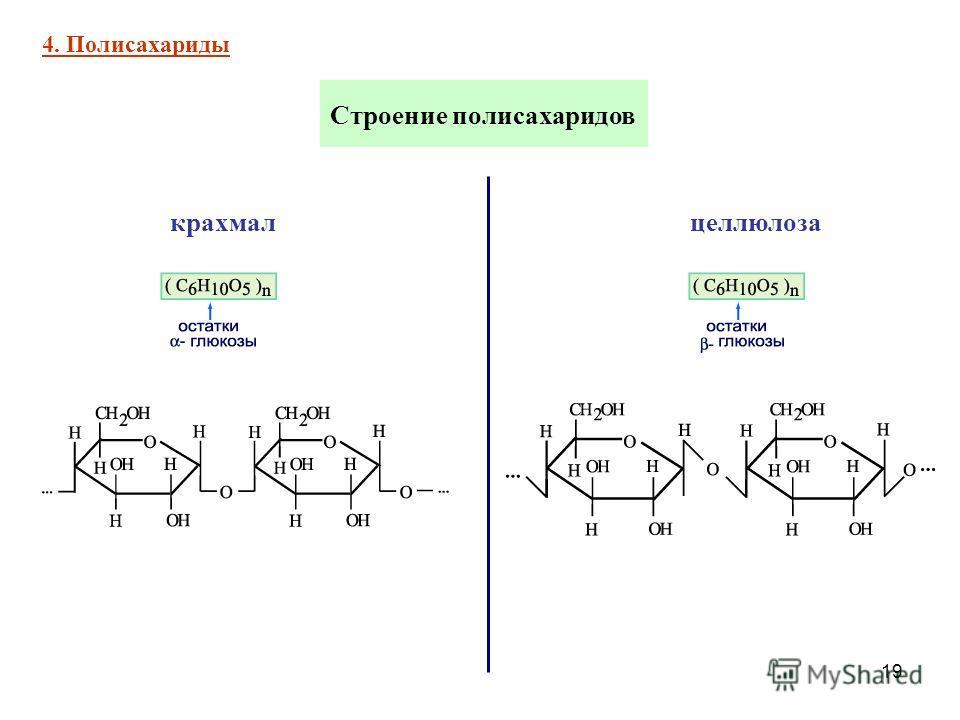 19 Строение полисахаридов 4. Полисахариды крахмал целлюлоза