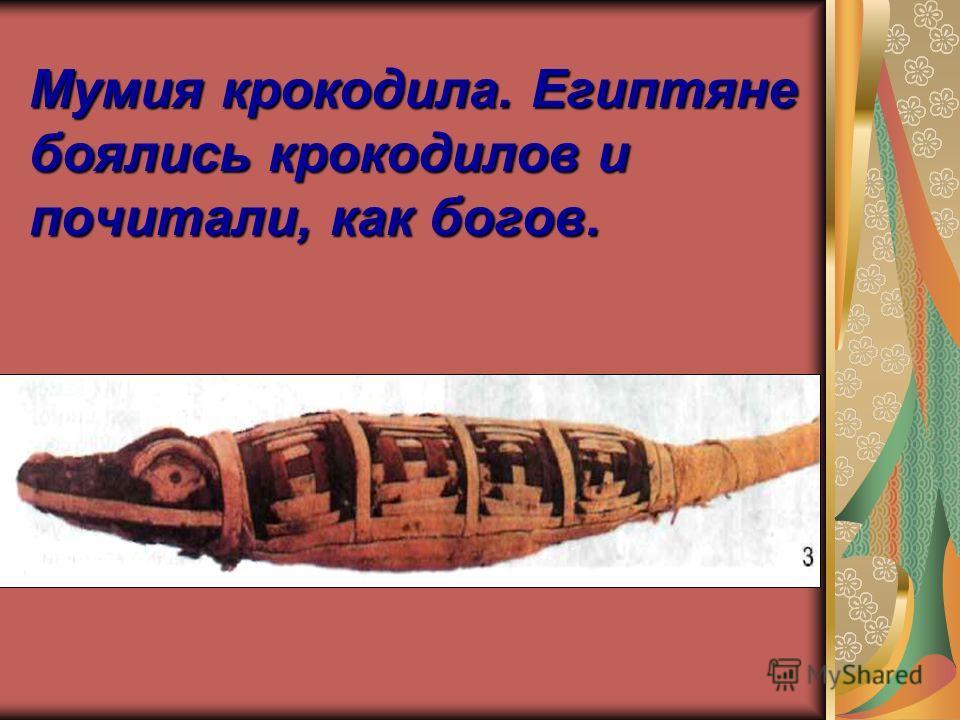 Мумия крокодила. Египтяне боялись крокодилов и почитали, как богов.