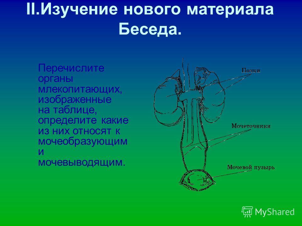 II.Изучение нового материала Беседа. Перечислите органы млекопитающих, изображенные на таблице, определите какие из них относят к мочеобразующим и мочевыводящим.
