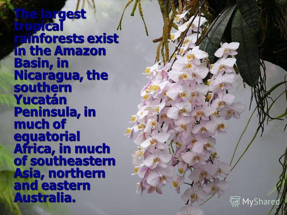 The largest tropical rainforests exist in the Amazon Basin, in Nicaragua, the southern Yucatán Peninsula, in much of equatorial Africa, in much of southeastern Asia, northern and eastern Australia.