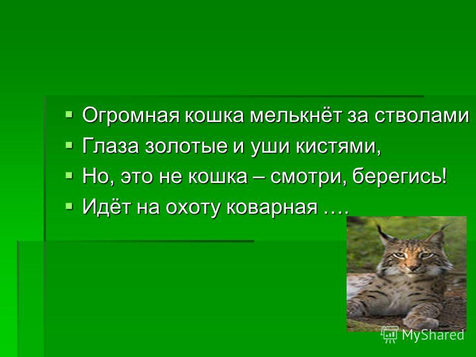 Огромная кошка мелькнёт за стволами Огромная кошка мелькнёт за стволами Глаза золотые и уши кистями, Глаза золотые и уши кистями, Но, это не кошка – смотри, берегись! Но, это не кошка – смотри, берегись! Идёт на охоту коварная …. Идёт на охоту коварн