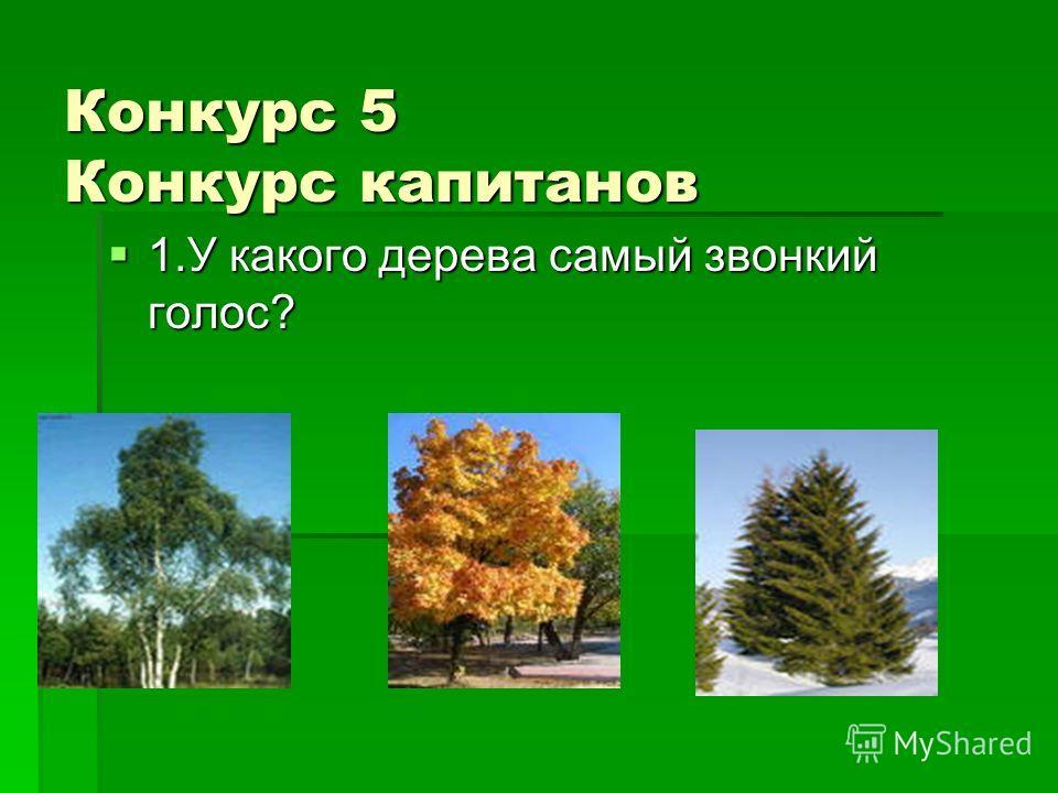 Конкурс 5 Конкурс капитанов 1. У какого дерева самый звонкий голос? 1. У какого дерева самый звонкий голос?