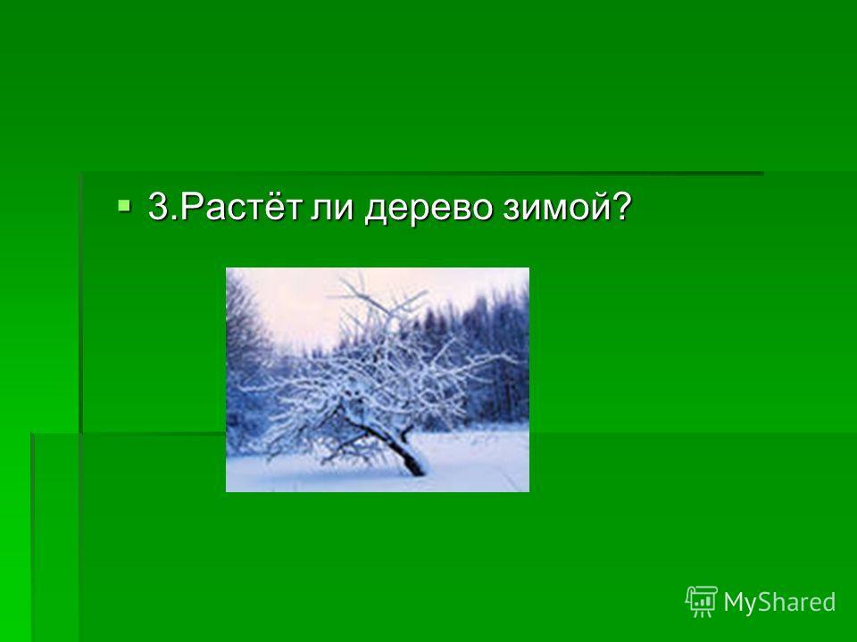 3.Растёт ли дерево зимой? 3.Растёт ли дерево зимой?