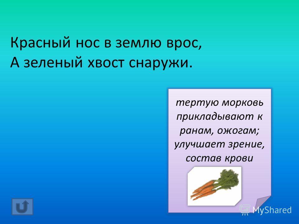 Красный нос в землю врос, А зеленый хвост снаружи. тертую морковь прикладывают к ранам, ожогам; улучшает зрение, состав крови