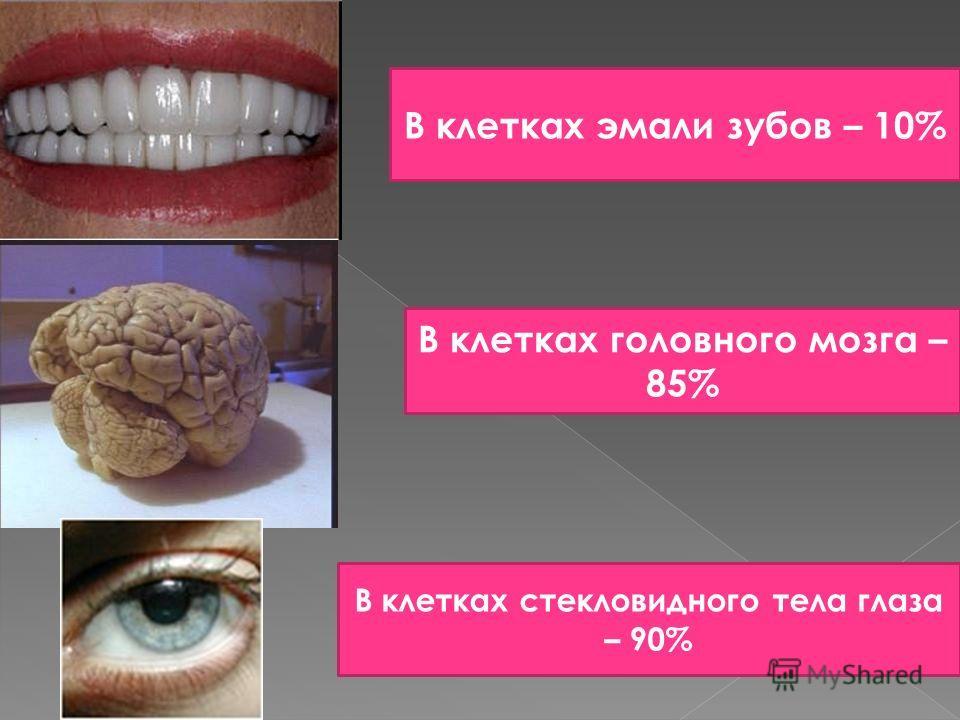 В клетках эмали зубов – 10% В клетках головного мозга – 85% В клетках стекловидного тела глаза – 90%