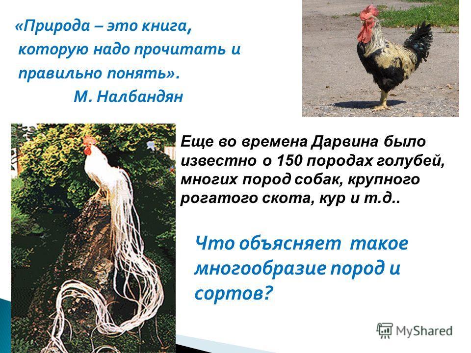 «Природа – это книга, которую надо прочитать и правильно понять». М. Налбандян Еще во времена Дарвина было известно о 150 породах голубей, многих пород собак, крупного рогатого скота, кур и т.д.. Что объясняет такое многообразие пород и сортов?