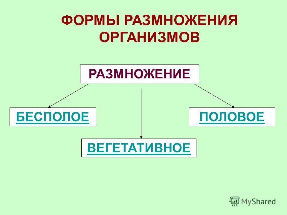 Размножение – это воспроизведение себе подобных, обеспечивающее продолжение существования вида. Размножение – основное свойство всех организмов. В результате размножения увеличивается число особей определенного вида, осуществляется непрерывность и пр