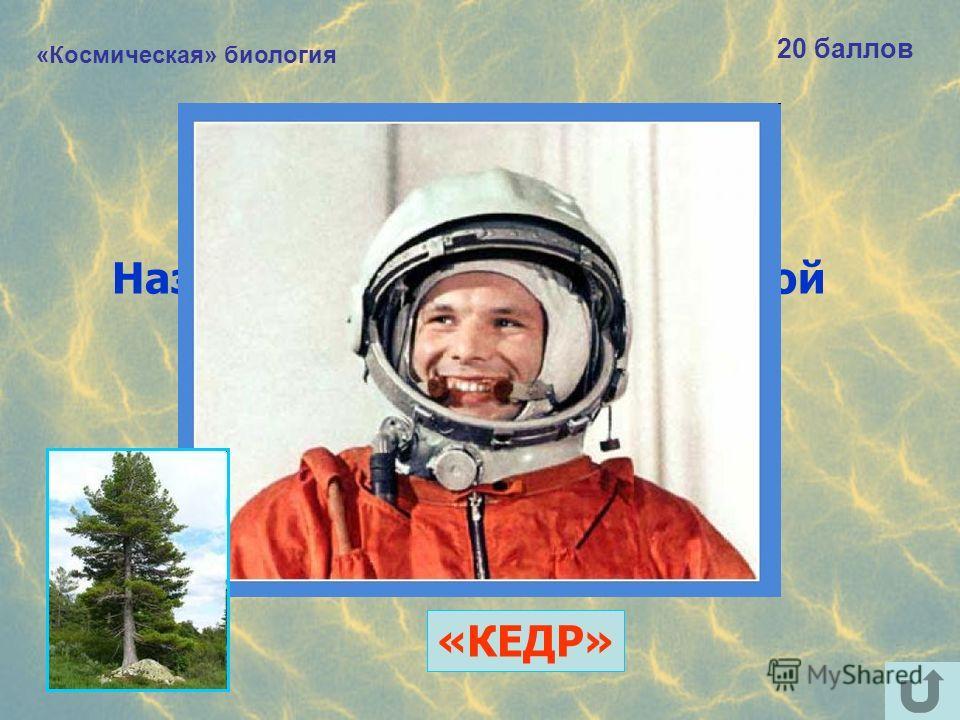 «Космическая» биология 20 баллов Назовите «хвойный» позывной Юрия Гагарина. «КЕДР»