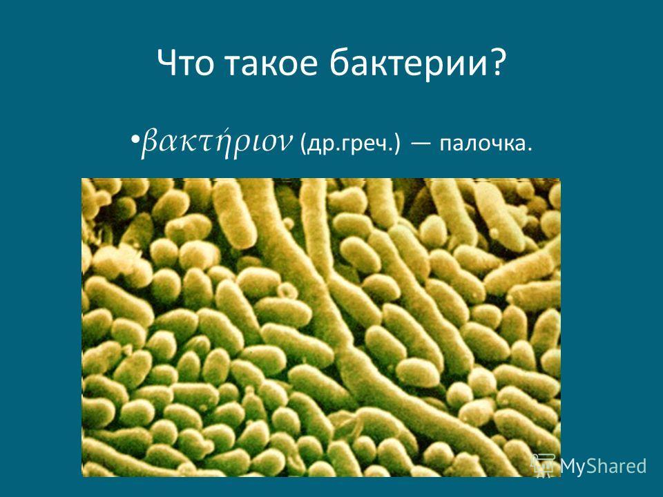 Что такое бактерии? βακτήριον (др.греч.) палочка.