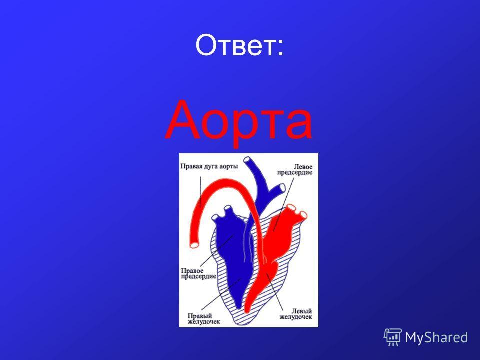 Ответ: Аорта