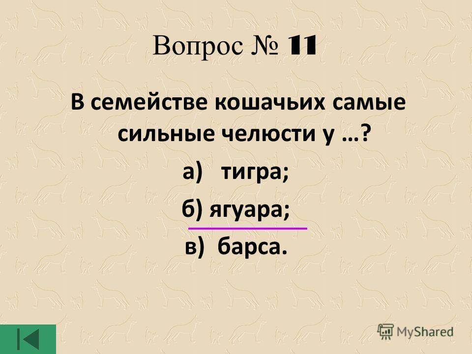 Вопрос 11 В семействе кошачьих самые сильные челюсти у …? а) тигра; б) ягуара; в) барса.