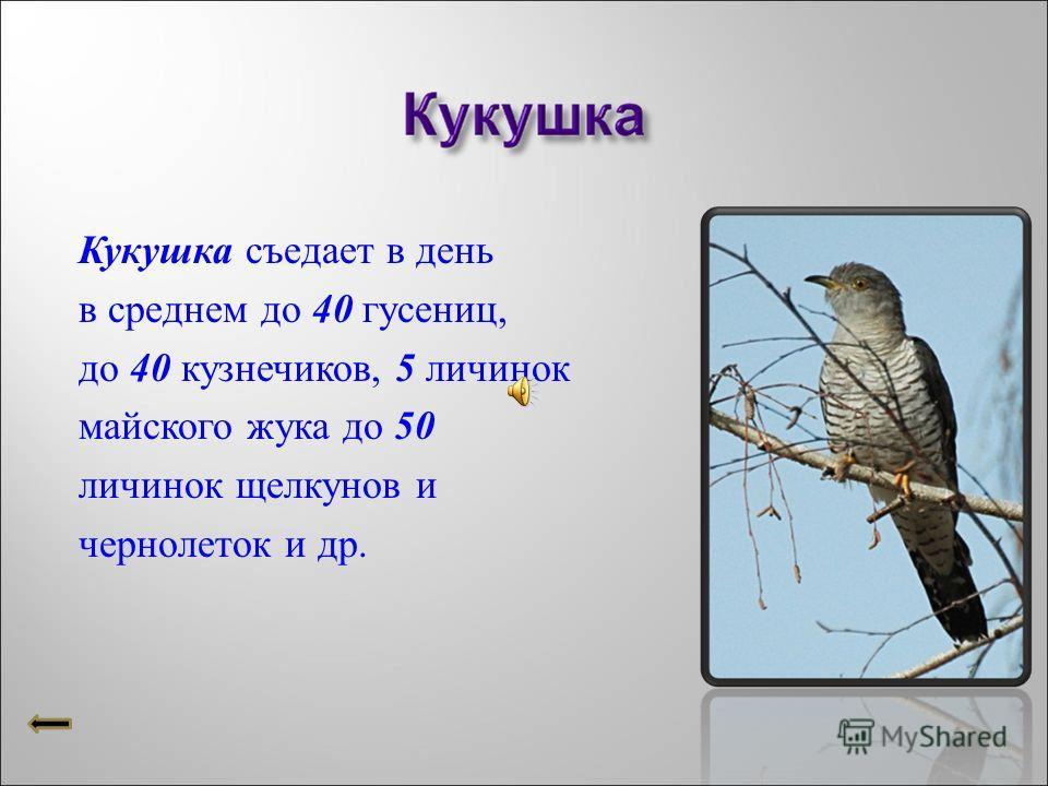 А - 309У - 8172К -1012К - 9280Ш -1503К-6375У-3086 Расположи ответы в порядке возрастания.