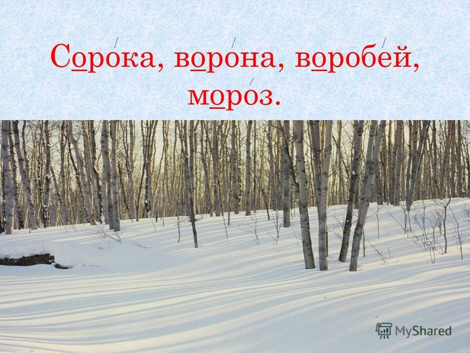 Сорока, ворона, воробей, мороз.