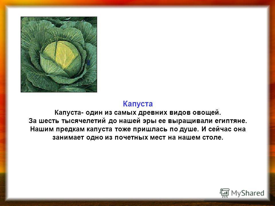 Капуста Капуста- один из самых древних видов овощей. За шесть тысячелетий до нашей эры ее выращивали египтяне. Нашим предкам капуста тоже пришлась по душе. И сейчас она занимает одно из почетных мест на нашем столе.