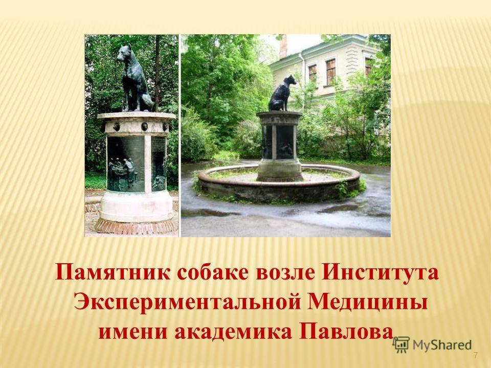 7 Памятник собаке возле Института Экспериментальной Медицины имени академика Павлова