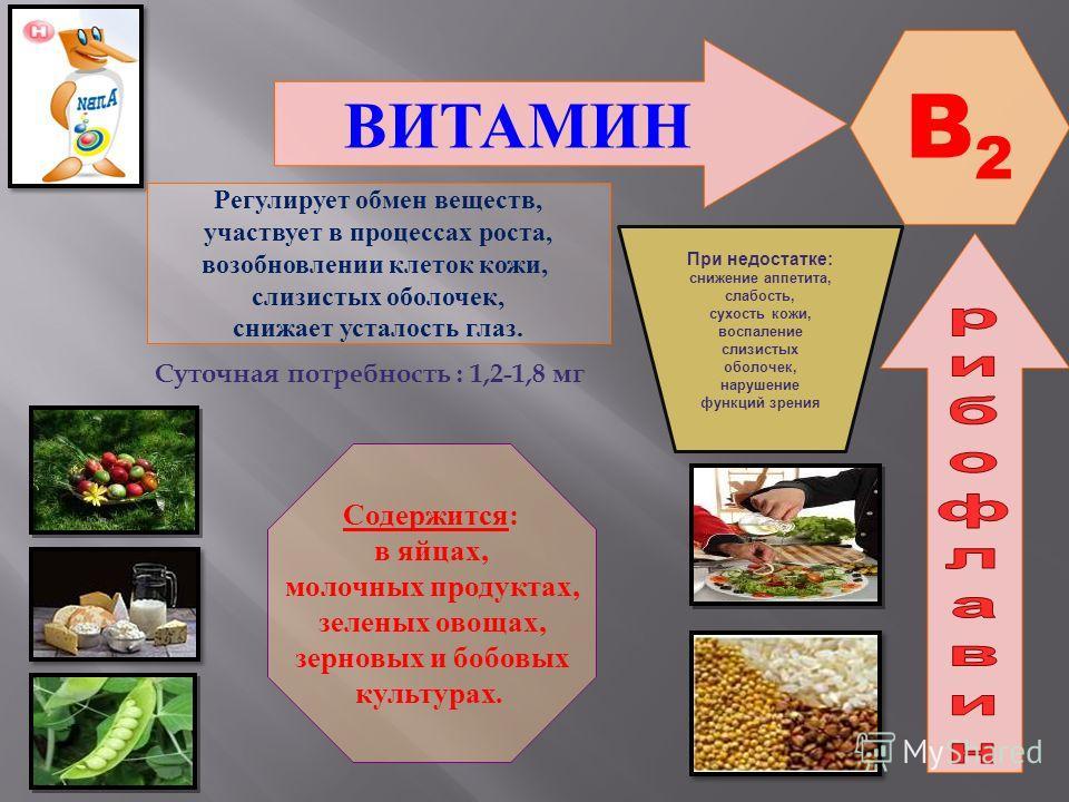 ВИТАМИН B2B2 Регулирует обмен веществ, участвует в процессах роста, возобновлении клеток кожи, слизистых оболочек, снижает усталость глаз. Содержится: в яйцах, молочных продуктах, зеленых овощах, зерновых и бобовых культурах. При недостатке : снижени