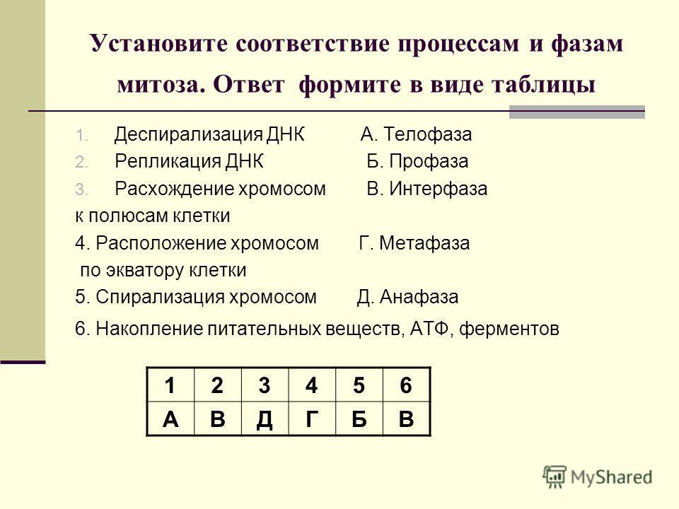 Установите соответствие процессам и фазам митоза. Ответ формите в виде таблицы 1. Деспирализация ДНК А. Телофаза 2. Репликация ДНК Б. Профаза 3. Расхождение хромосом В. Интерфаза к полюсам клетки 4. Расположение хромосом Г. Метафаза по экватору клетк
