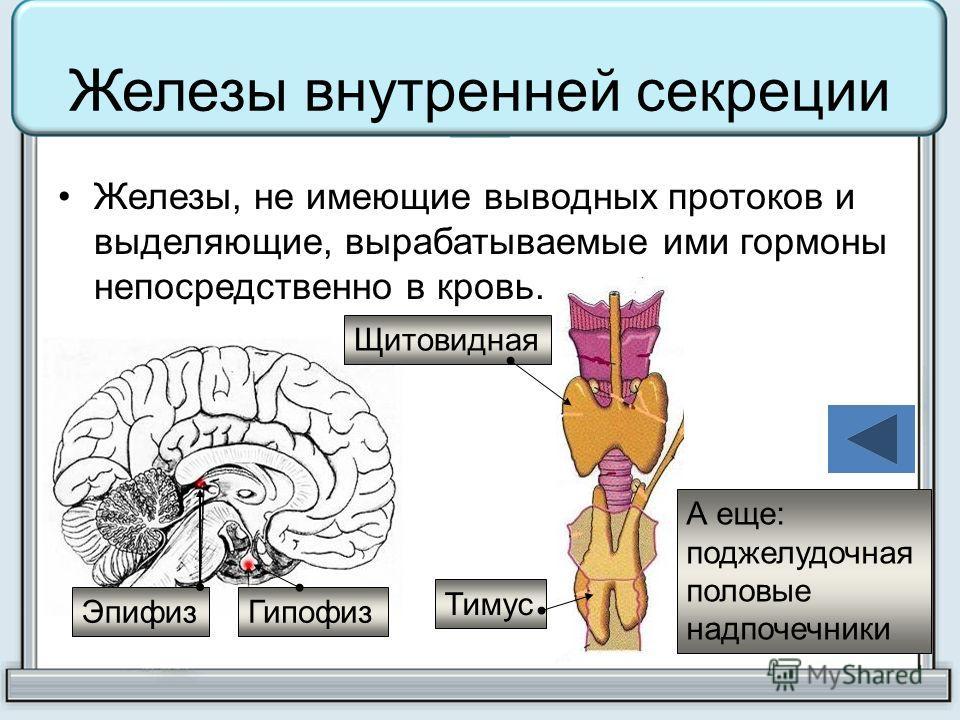Железы внутренней секреции Железы, не имеющие выводных протоков и выделяющие, вырабатываемые ими гормоны непосредственно в кровь. Эпифиз Гипофиз Тимус Щитовидная А еще: поджелудочная половые надпочечники