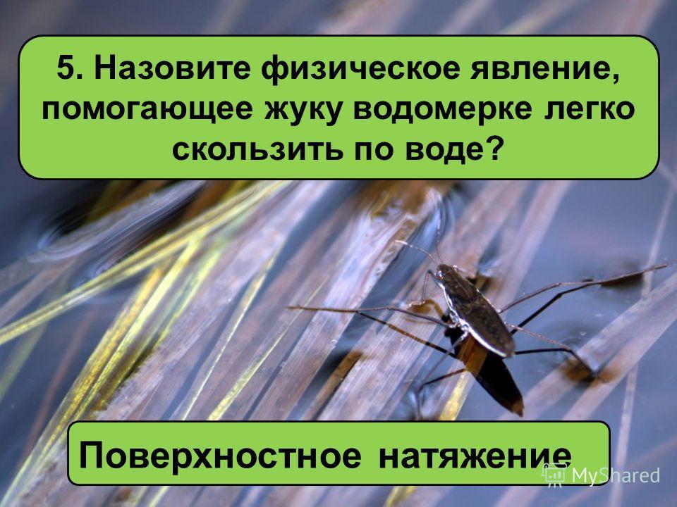4. Почему в самолётах закладывает уши? Из-за разницы давления в организме человека и внешней среды