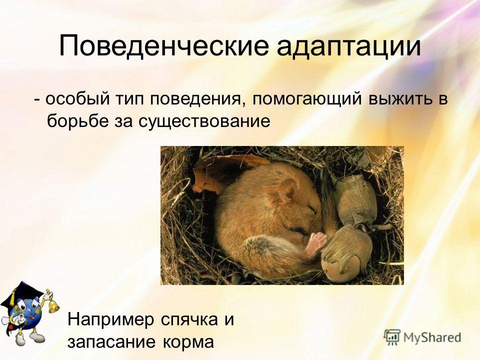 Поведенческие адаптации - особый тип поведения, помогающий выжить в борьбе за существование Например спячка и запасание корма