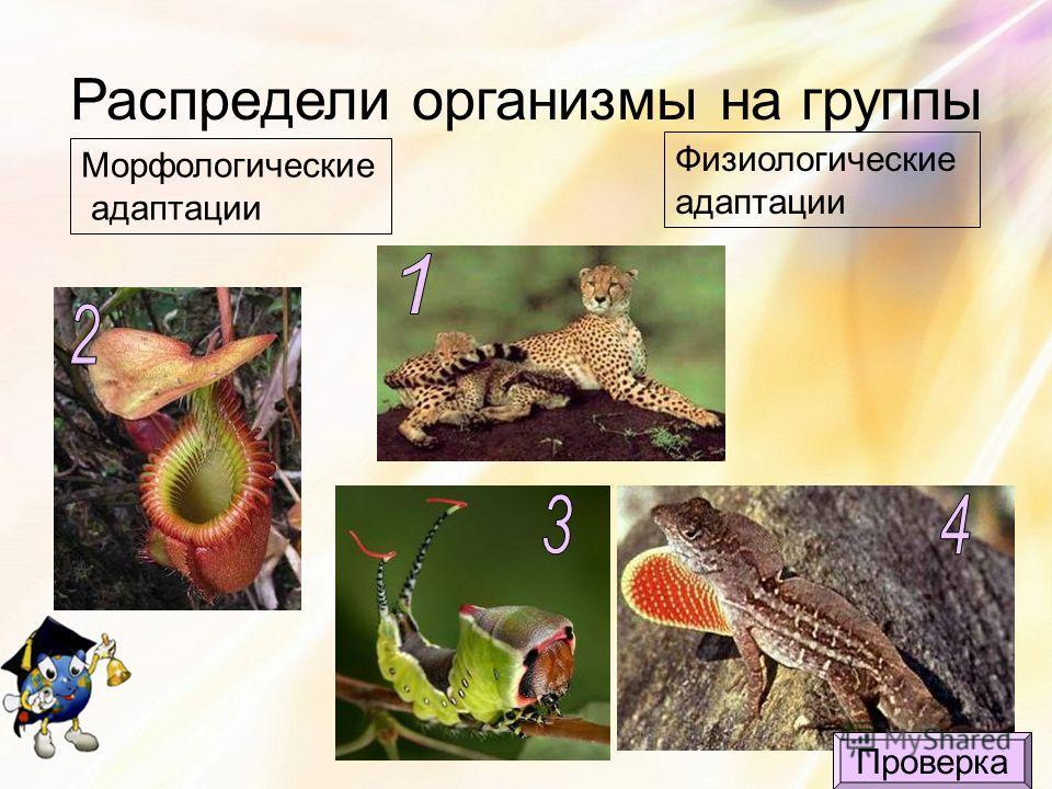Распредели организмы на группы Морфологические адаптации Физиологические адаптации Проверка