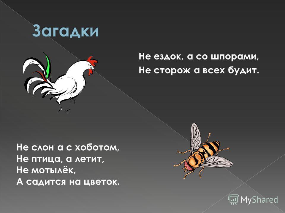 Не ездок, а со шпорами, Не сторож а всех будит. Не слон а с хоботом, Не птица, а летит, Не мотылёк, А садится на цветок.