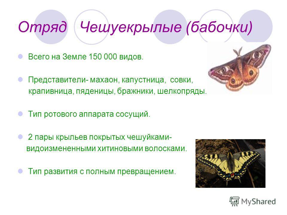 Отряд Чешуекрылые (бабочки) Всего на Земле 150 000 видов. Представители- махаон, капустница, совки, крапивница, пяденицы, бражники, шелкопряды. Тип ротового аппарата сосущий. 2 пары крыльев покрытых чешуйками- видоизмененными хитиновыми волосками. Ти