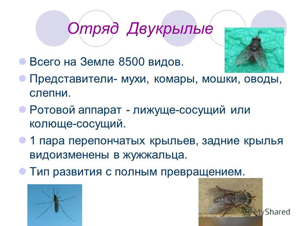 Отряд Двукрылые Всего на Земле 8500 видов. Представители- мухи, комары, мошки, оводы, слепни. Ротовой аппарат - лижуще-сосущий или колюще-сосущий. 1 пара перепончатых крыльев, задние крылья видоизменены в жужжальца. Тип развития с полным превращением