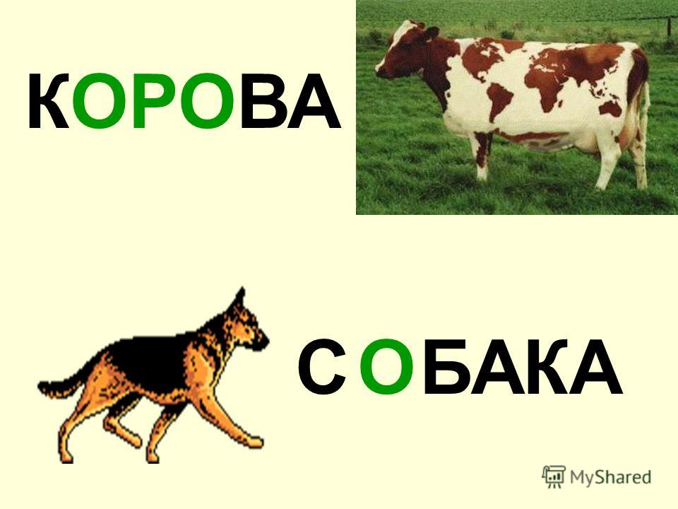 КОРОВА БАКАСО
