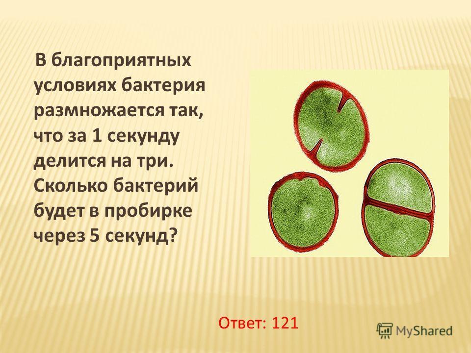 В благоприятных условиях бактерия размножается так, что за 1 секунду делится на три. Сколько бактерий будет в пробирке через 5 секунд? Ответ: 121