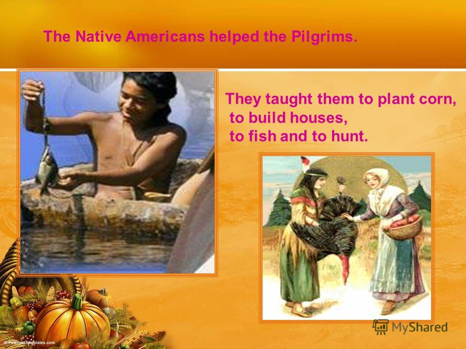 The Native Americans helped the Pilgrims. They taught them to plant corn, to build houses, to fish and to hunt.