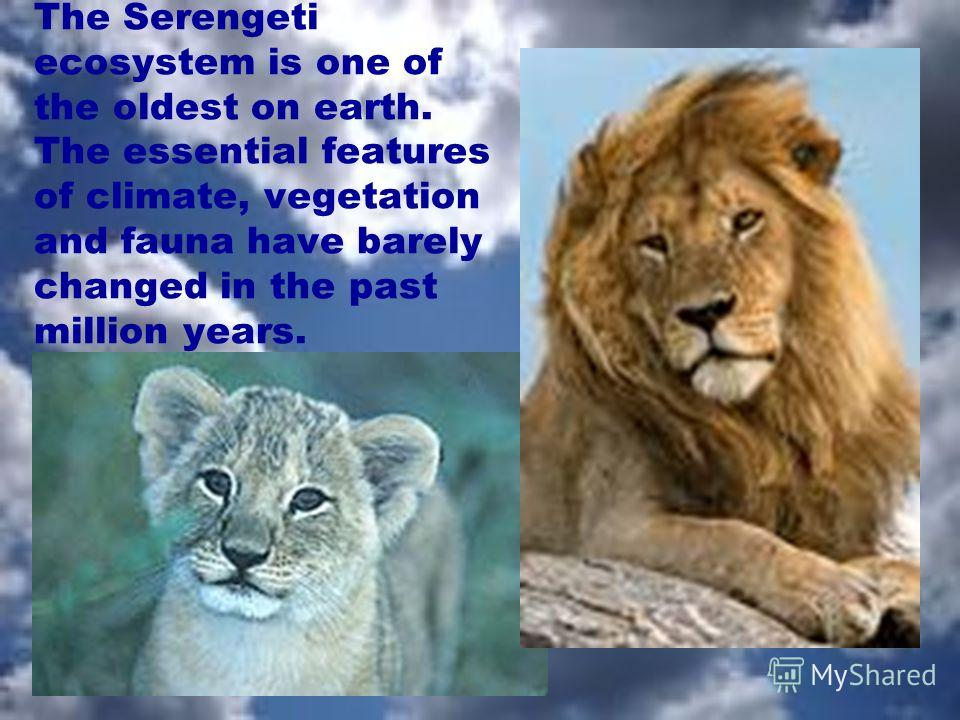 The Serengeti ecosystem is one of the oldest on earth. The essential features of climate, vegetation and fauna have barely changed in the past million years.