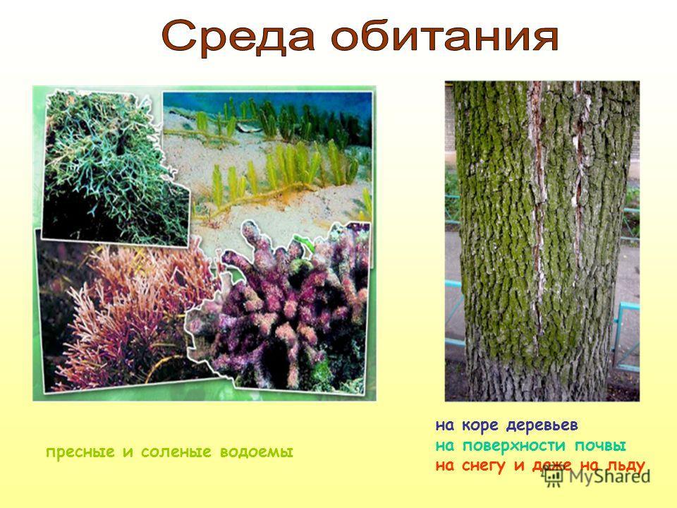 пресные и соленые водоемы на коре деревьев на поверхности почвы на снегу и даже на льду