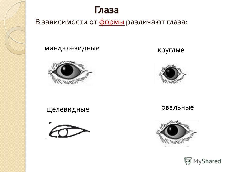 Глаза В зависимости от формы различают глаза : миндалевидные щелевидные круглые овальные круглые