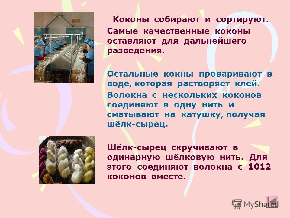 Коконы собирают и сортируют. Самые качественные коконы оставляют для дальнейшего разведения. Остальные кокни проваривают в воде, которая растворяет клей. Волокна с нескольких коконов соединяют в одну нить и сматывают на катушку, получая шёлк-сырец. Ш